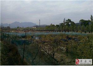 龙嘉七彩野山鸡生态养殖园招募养殖户