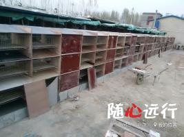供應優質水泥兔籠   瓷磚兔籠