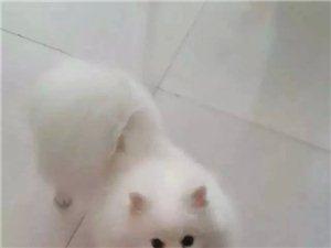 寻狗启示!!!!