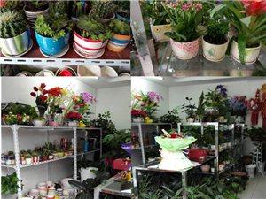 鲜花、花束、花车、盆景、花篮长期供应