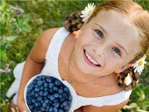 秦池藍莓酒莊藍莓采摘節