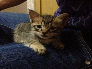 为小花猫寻找新的家