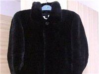 低价出售男士黑貂 - 5000元