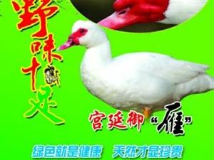 农家有机珍禽非洲雁蛋