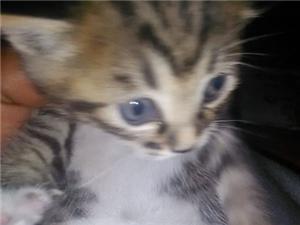 出售自家小猫两只要的速度