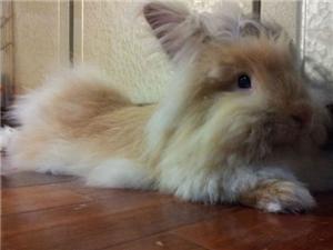 出售宠物各种萌兔