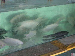 进口国产罗汉鱼及各种热带鱼