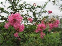 院子里的花儿