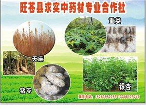 旺苍县求实中药材专业合作社