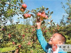 平川万亩小苹果放养深山等你来