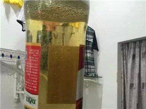 大理一小伙喝大理V8啤酒喝出黑漆漆的东西,以后喝啤酒得仔细了